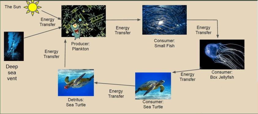leatherback sea turtle food web diagram 4 light ballast wiring chain the box jellyfish