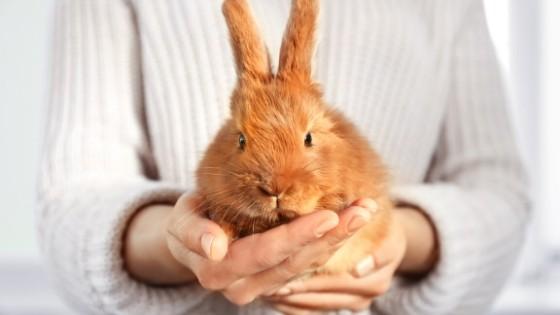 วิธีดูเพศกระต่าย เลี้ยงกระต่าย