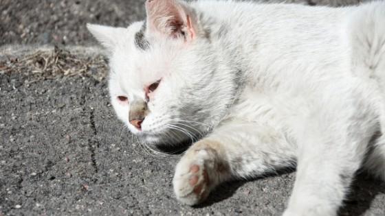 คนรักแมวต้องรู้ วิธีรักษาแมวท้องเสีย ทำได้อย่างไร