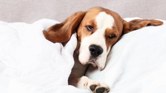 ไปเช็คกัน! หมาของเรากำลังป่วยหรือเปล่า เราจะรู้ได้ยังไงนะ?