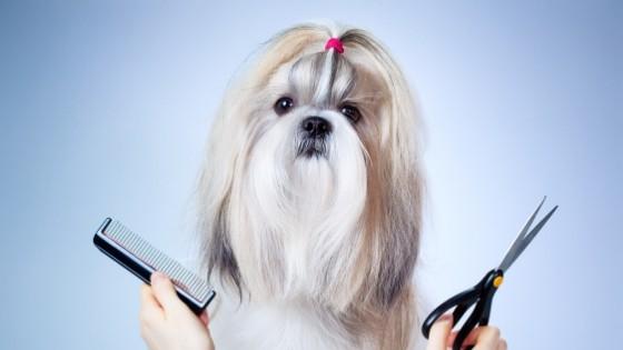มาดูกันเถอะว่า ทำไมต้องตัดขนหมาแล้วมันจำเป็นหรือเปล่านะ