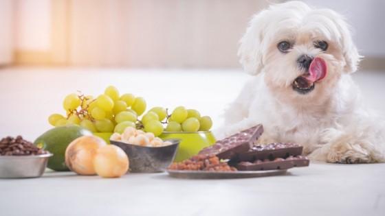 ควรอ่านฉลากก่อนว่าอาหารชนิดนั้น ๆ เหมาะกับน้องหมาของเราหรือไม่