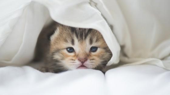 วิธีเลี้ยงแมวแรกเกิด ที่มือใหม่ควรรู้