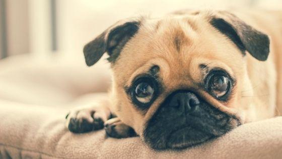 ปัจจัยในการเลี้ยงสุนัข : ค่าใช้จ่าย
