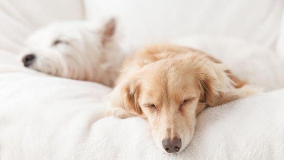 ปัจจัยในการเลี้ยงสุนัข ที่คุณต้องรู้ ก่อนตัดสินใจเลี้ยง