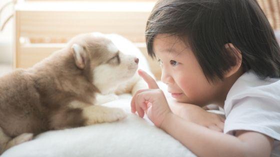 สุนัขไซบีเรียน