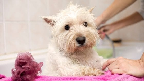 หมาท้อง อาบน้ำได้ไหม