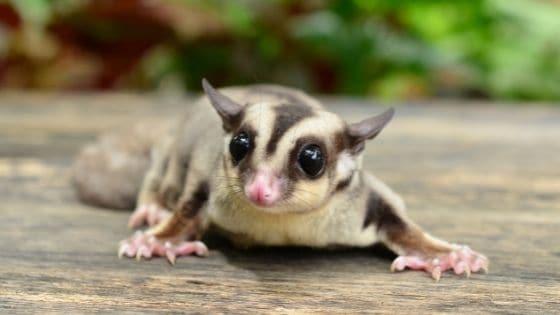 สัตว์เล็ก