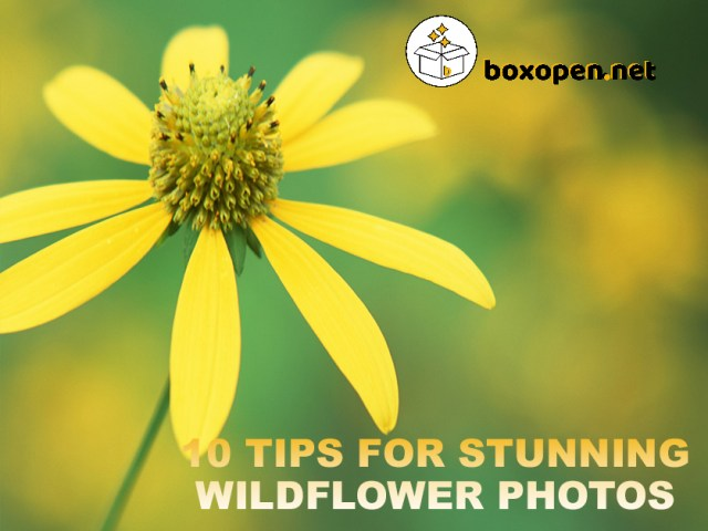 10 Tips For Stunning Wildflower Photos