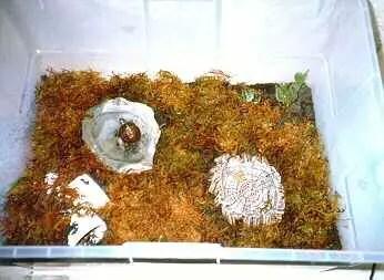 Housing to breed box turtles