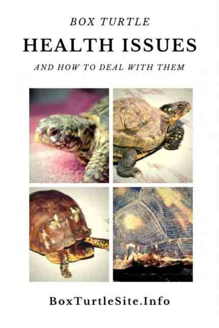 Is you box turtle sick - read this post about common box turtle diseases and how to take care of your sick box turtle. All you need to know about box turtle health