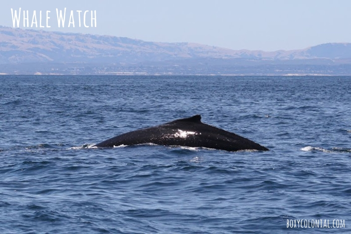 Santa Cruz Whale Watch