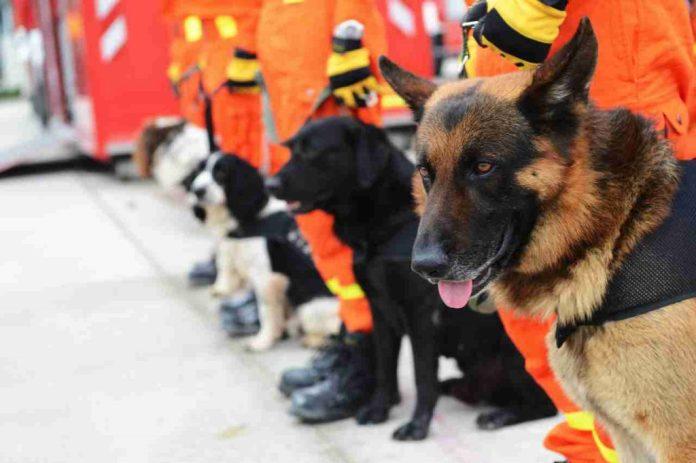 Canino de rescate boyacense
