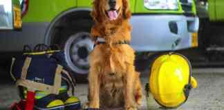 Mascotas - Caninos de rescate