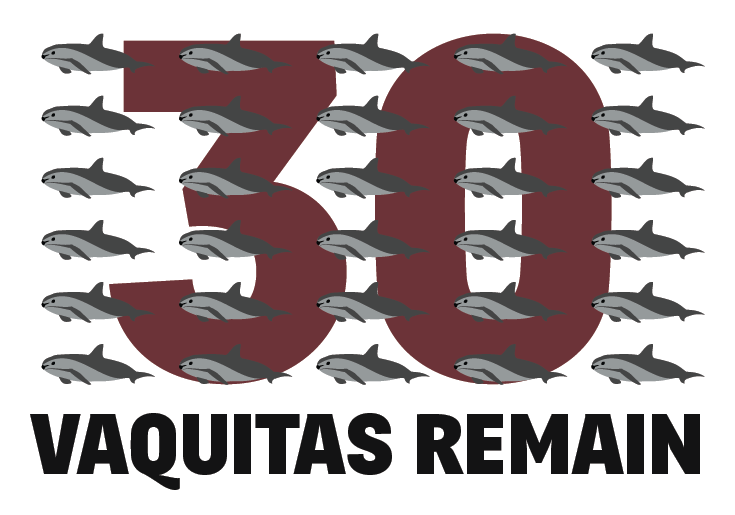 Only 30 Vaquita Left