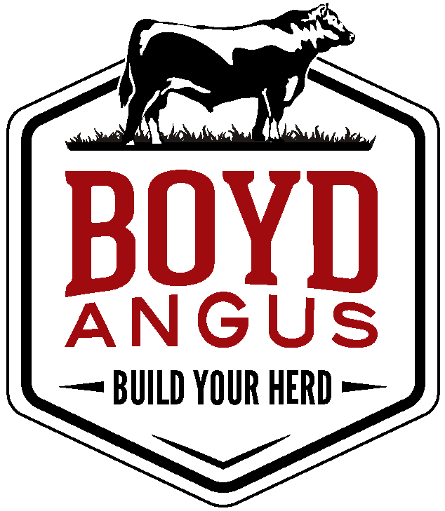 Boyd Angus Ranch