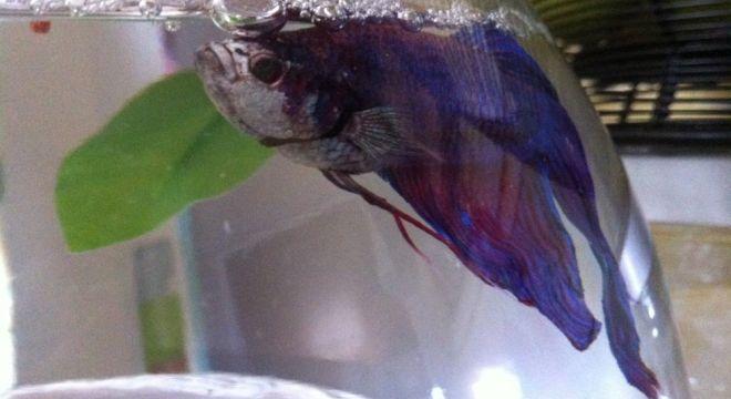 Pearlio, in his habitat.