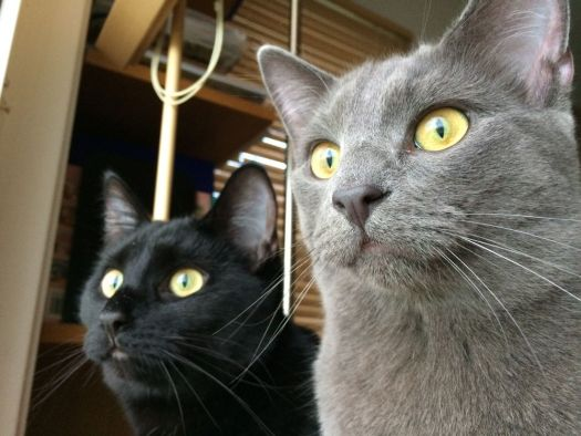 Kitties.