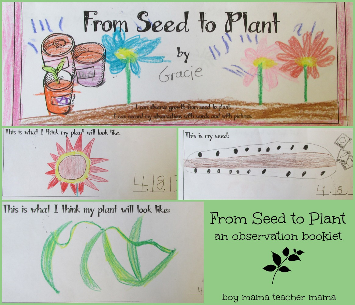 Teacher Mama From Seed To Plant An Observation Booklet