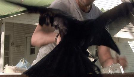 conjurer crow fight
