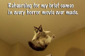 cat scare kitty