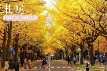 北海道大學銀杏大道|金黃閃耀讓人捨不得眨眼的札幌秋季名所