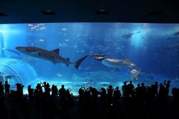 【沖繩自駕親子遊】讓人流連忘返的必去景點 沖繩海洋博公園 (美麗海水族館)