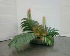 My first freestyle Ikebana arrangement. Freestyle means we can ignore the basic forms of Ikebana, but obviously the training has made us aware of proportions and balance. I used Calothamnus villosus for spiky contrast with Melianthus major leaves.