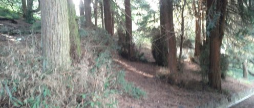 A redwood grove in the sheltered northeastern portion.