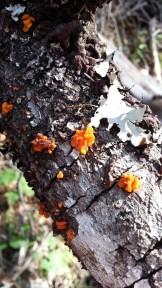 Beautiful fungi and lichens.