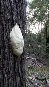 Funky fungus.