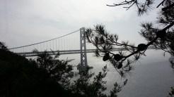 Pines and bridge.