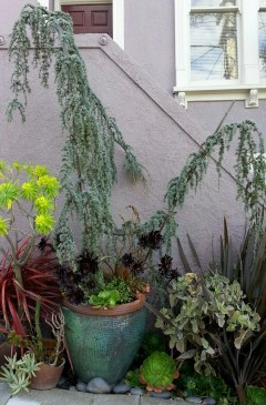 Beautiful combination of plants and pots, obviously from Flora Grubb Gardens. Found on a neighborhood walk, somewhere in the top of Eureka Valley.