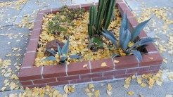 Deterrence: Cacti and agaves.
