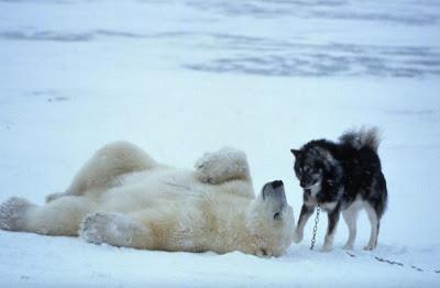 Resultado de imagen de perro oso jugando