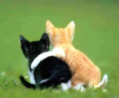 Cats in love.