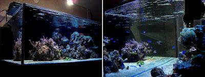 Keeping  Marine Fish Water