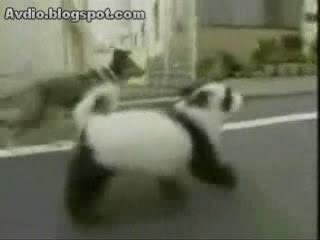 熊貓狗 panda dog