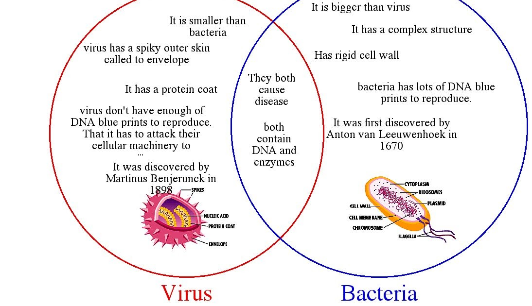 venn diagram of bacteria and archaea honeywell chronotherm iii wiring do you know?: know the difference between a bacterial viral infection?