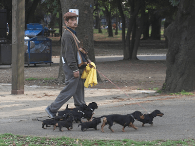 dachshunds in japan