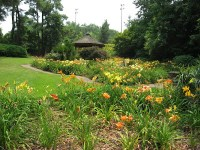 Jaycee Lily Garden