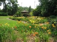 Jaycee Lily Garden | Raleigh Nature