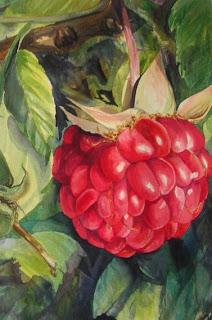 Raspberries watercolor painting by Angela Fehr