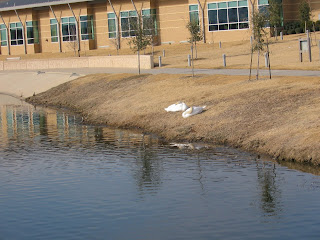 Two birds enjoying an afternoon siesta on the banks of Josey Ranch Lake