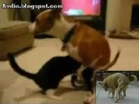 Dog Fucking Cat By Mouth