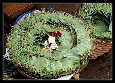 The Betel (Piper betle)//flickr.com/photos/jrodrigues949/2433986433 //bp1.blogger.com/_gT3V6MvUifE/SJTJtErf9sI/AAAAAAAABEE/lbqc4XKKpAc/s400/2433986433_a0a8664a24.jpg