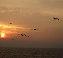 πουλιά ουρανός ηρεμία ισορροπία