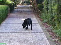 Dog wondering the street in Charleston South Carolina