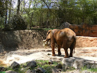Elephant Painter Taking a Lunch Break at Greenville Zoo