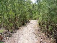 Uphill on Midlands Trail